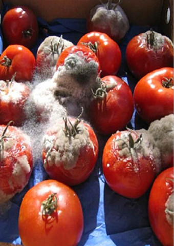 Applications of Airocide for Fruits & Vegetables Industry